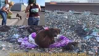 Download Youtube: Homeless Pit Bull sits by her dead friend for two weeks...