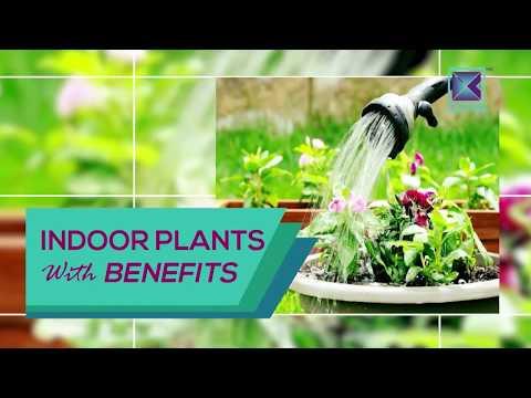 (Indoor plants with Benefits | Ke Aaaja Gharmai - Short Clip - Duration: 3 minutes, 39 seconds.)