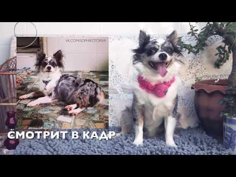 Как фотографировать собак | Ошибки и советы