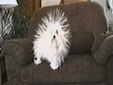 Cute Little Static Doggy Full of Energy – Funny Video
