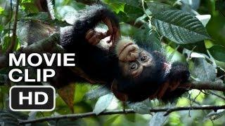 Nonton Chimpanzee Movie Clip   Swingin   2012  Disney Nature Movie Hd Film Subtitle Indonesia Streaming Movie Download