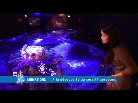 A la découverte du corail fluorescent