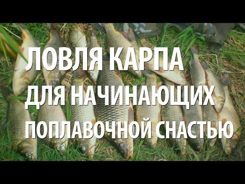 ловля на поплавочную удочку видео для начинающих