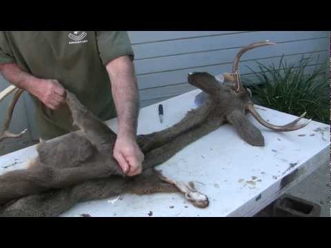 Testa's Taxidermy Tip's – Full Deer Head Skinning