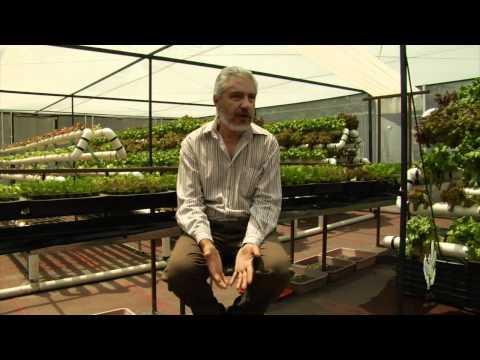 Proyecto de Hidroponía en la Facultad de Ciencias de la UNAM