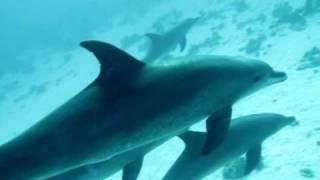 Shaab El Erg / Dolphin Reef / House