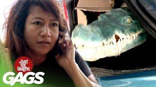 farse farsa crocodil