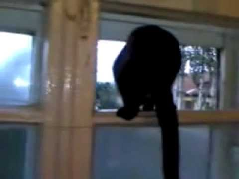 Cat gets caught barking by a human and resumes meowing