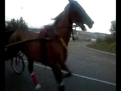 giuseppe a cavallo