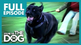 Video The Dogs That Walk Their Owners: Toadie and Smartie | Full Episode | It's Me or The Dog MP3, 3GP, MP4, WEBM, AVI, FLV Juli 2019