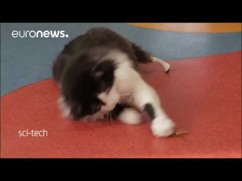 The Cat with Bionic Legs