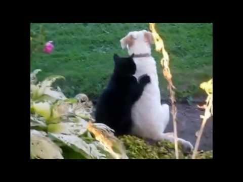il video dell'anno: gli animali più teneri e divertenti!
