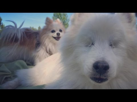 Blind Dog Has His Own SeeingEye Dog