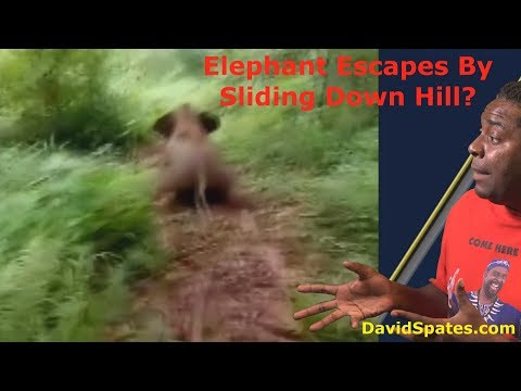 Elephant Escapes By Sliding Down Hill❗😲 😮Commentary & Vid😮 (David Spates)