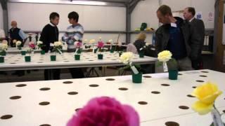 #490 David Austin Roses 2011 - Schnittrosenzüchtung 1v3