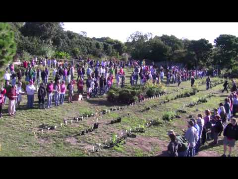 Annual Plants - The epic event of public horticulture where thousands of choice and rare plants are freely given away to Friends of the JC Raulston Arboretum at NC State Uni...