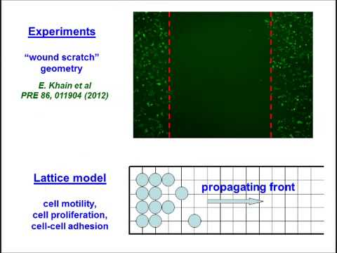 Modeling chemotaxis of adhesive cells - stochastic lattice approach and continuum description