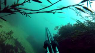 Dorset United Kingdom  city photos : Spearfishing Dorset UK (GoPro)