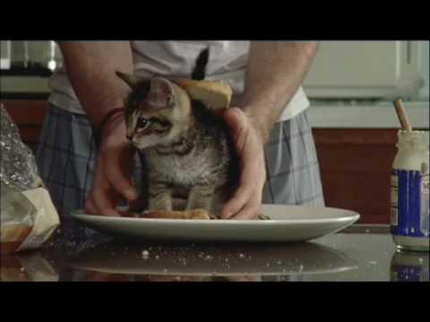 Swedish Fish Cat Sandwich