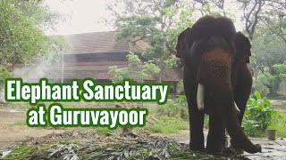 Punnathoor Kotta Elephant Sanctuary at Guruvayoor