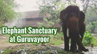 Punnathoor Kotta Elephant Sanctuary at Guruvayoor