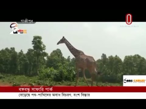 Nature has regained its life at Bangabandhu safari park (01-07-2020)Courtesy:Independent TV