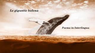Le gigantic balena nata lento, maestoso trans le infinite oceano In le abysso profunde illo ascolta distante echos submarin Solitari in le precipitio illo trova su via ...