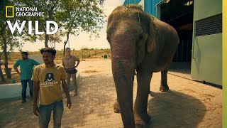 Operation Elephant   Jungle Animal Rescue by Nat Geo WILD
