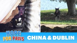 Abandoned dogs waited for someone to call Hope For Paws! by Hope For Paws