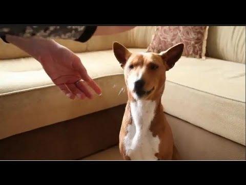 Как дрессировать щенка дома? Говорит ЭКСПЕРТ
