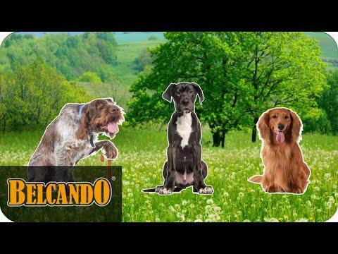 BELCANDO | Ergänzungsfutter #3 - AGIL-Tabs mit Grünlippmuschel