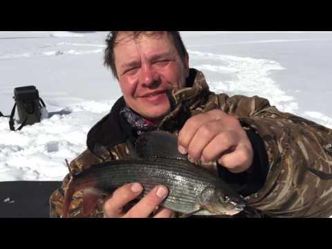 абаканская рыбалка на хариуса