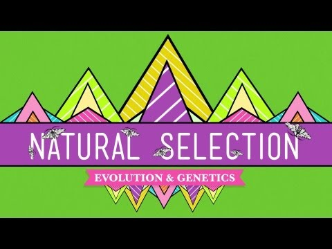 Selection - Hank guides us through the process of natural selection, the key mechanism of evolution. Like CrashCourse on Facebook: http://www.facebook.com/YouTubeCrashCo...