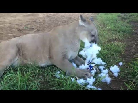 Cassie The Cougar Makes Another Bold Prediction
