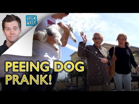 THE PEEING DOG PRANK!