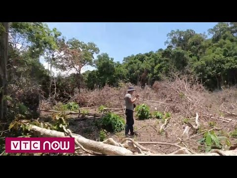 Phú Quốc - Xé rừng bán đất đêm đêm | VTC1 - Thời lượng: 7 phút, 22 giây.