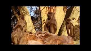 Afrique du Sud : Parc National du Kruger (4/4)