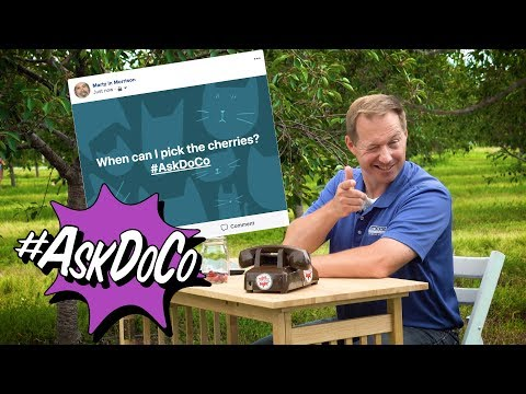 #AskDoCo - Where Can I Pick Cherries?