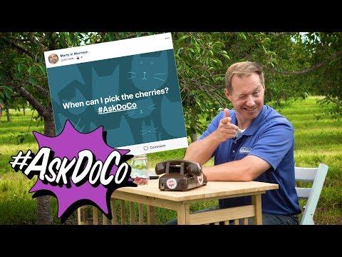 #AskDoCo - Where Can I Pick Cherries?