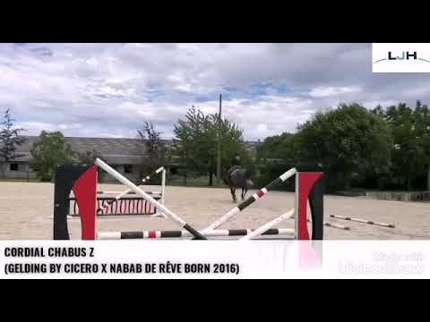 CORDIAL CHABUS Z TRAINING JULY 2020
