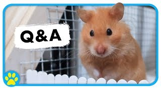 Q&A | Rodent Weights | Exercise Balls | Cute Pet Footage & More! by ErinsAnimals