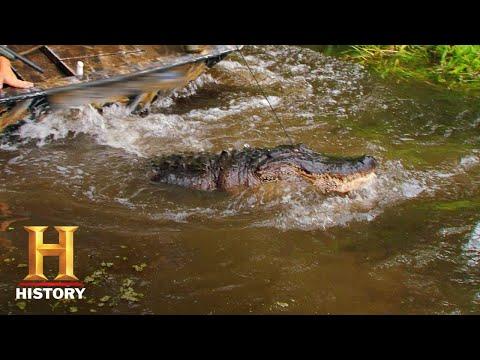 Swamp People: Submarine Gator Hunt (Season 8)   History
