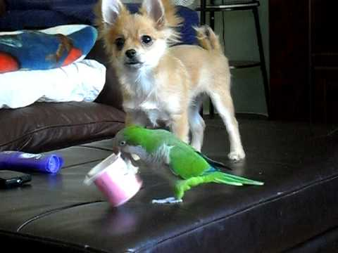 Sweet-Dog-Vs-Parrot