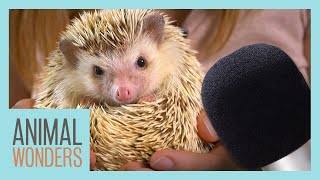 Animal ASMR! | Hedgehog, Armadillo, Dragon! by Animal Wonders