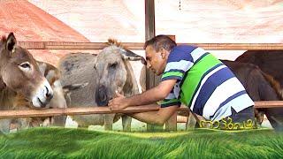Video ഐടി വിട്ട് കഴുതപ്പാലിലൂടെ നേട്ടം കൊയ്ത എബിയുടെ കഥ | Donkey Farm| Nattupacha MP3, 3GP, MP4, WEBM, AVI, FLV Februari 2019