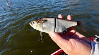 Video Most REALISTIC Swimbait? Bass Fishing LEGENDARY Lake Fork for the First Time! MP3, 3GP, MP4, WEBM, AVI, FLV Februari 2019