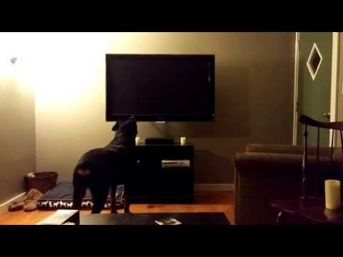 Pet in TV Playstation