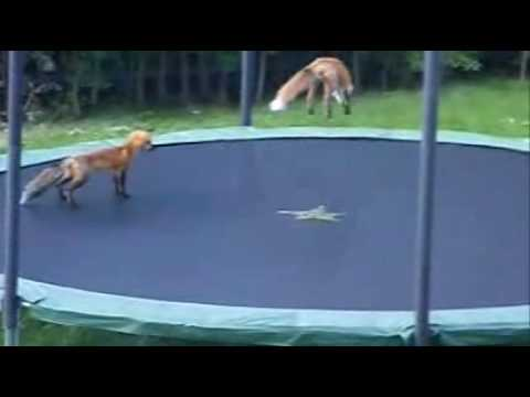 Funny Trampoline Moments
