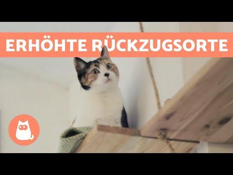 Warum Katzen erhöhte Plätzen lieben - 5 Gründe