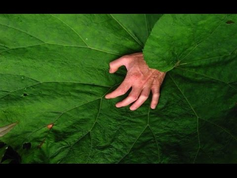 Top 10 Deadliest Plants And Flowers